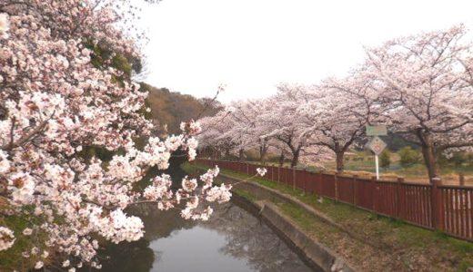 浦和美園・春イベント|感動の日本一 見沼たんぼ桜回廊ウォーク(南回り13km)を紹介