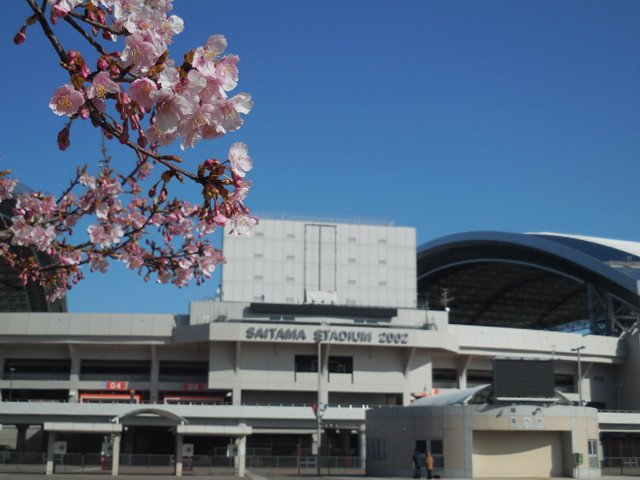 埼玉スタジアム2002 河津桜