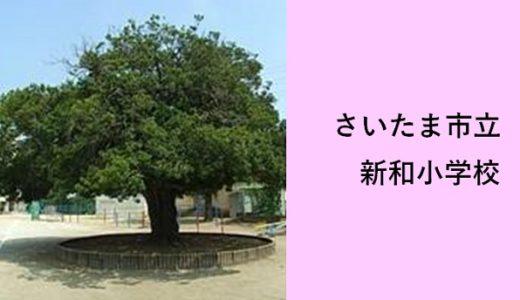 新和小学校|さいたま市浦和美園の小学校(もちのきが見守る小学校)