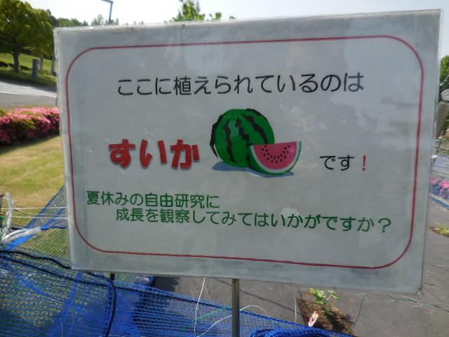 埼玉スタジアム2002公園 すいか
