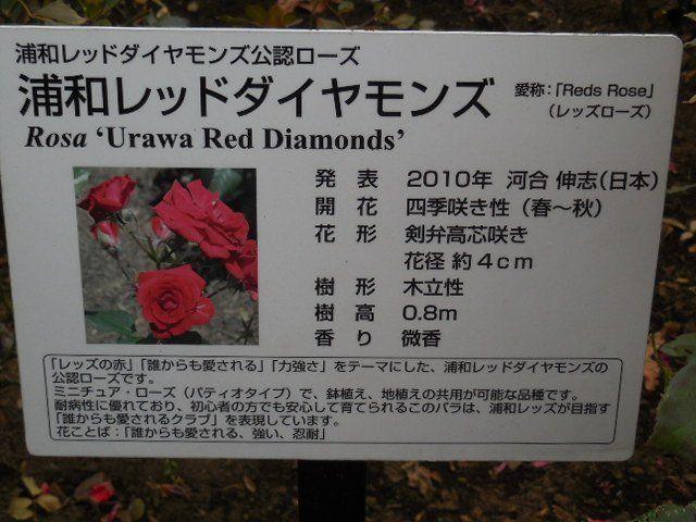 埼玉スタジアム2002公園・レッズローズ
