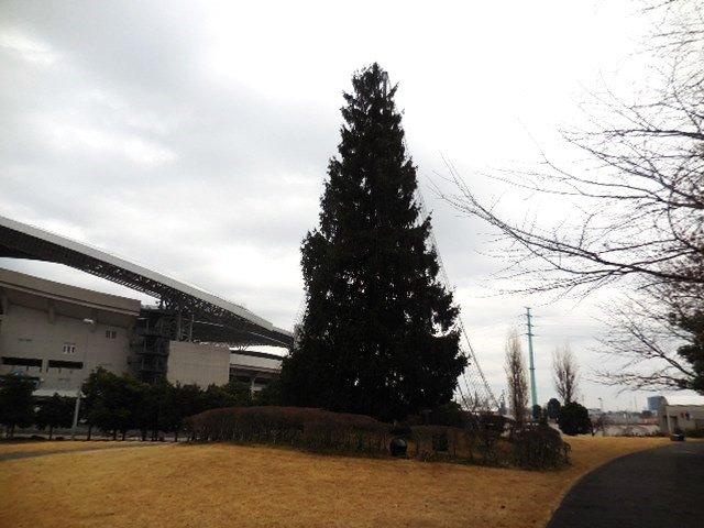 埼玉スタジアム2002公園 もみの木広場